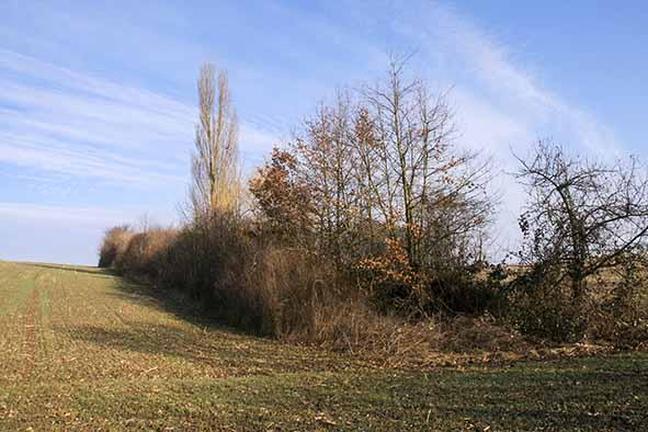 Wollmesheim: Grüner Trittstein inmitten der Agrarlandschaft