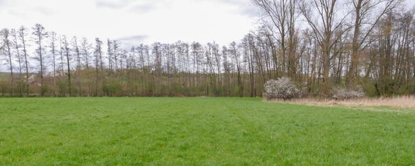 Wiesen im Blankenbruch, Gemarkung Billigheim