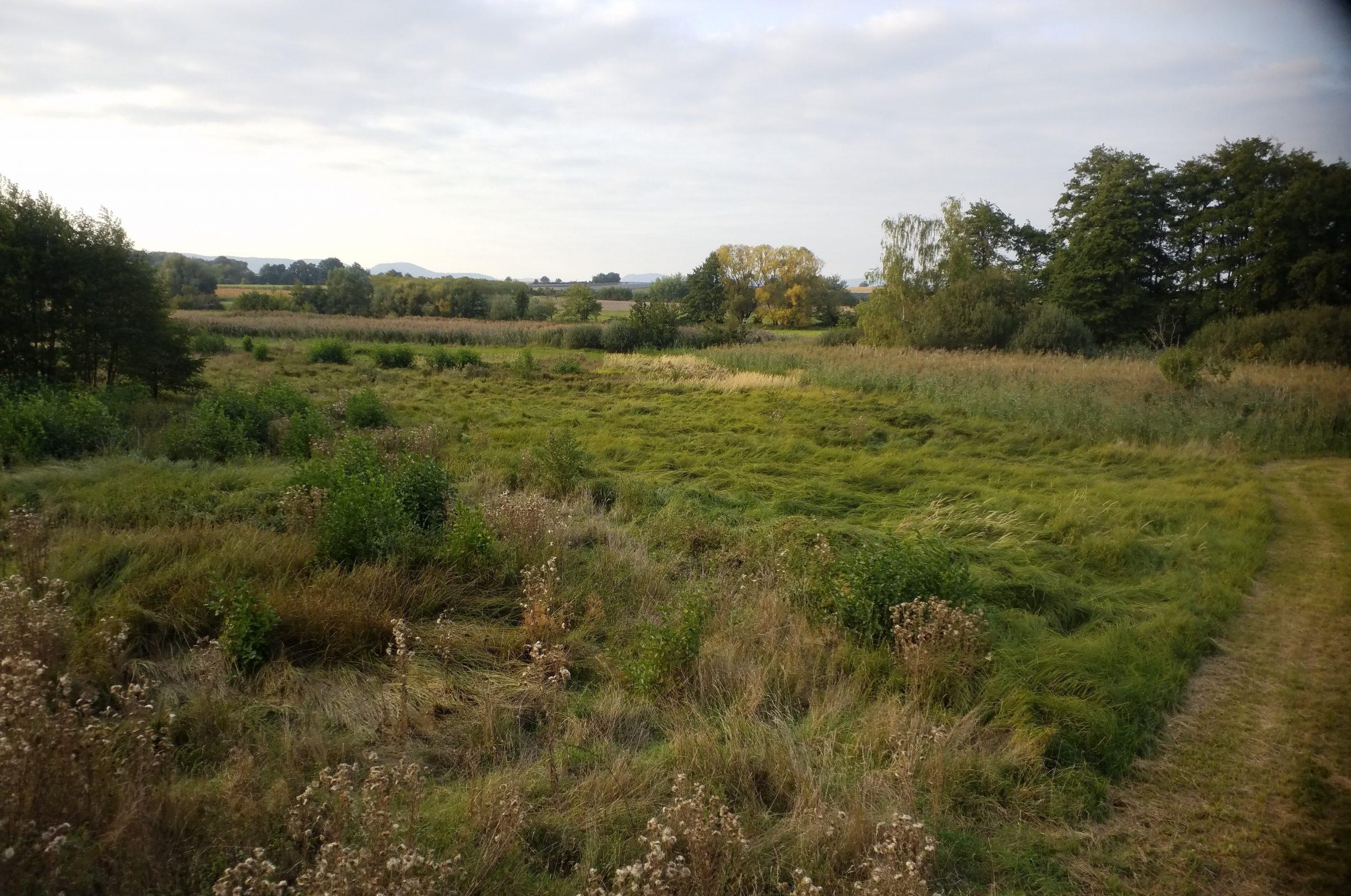 Billigheimer Bruch Moor Wiese